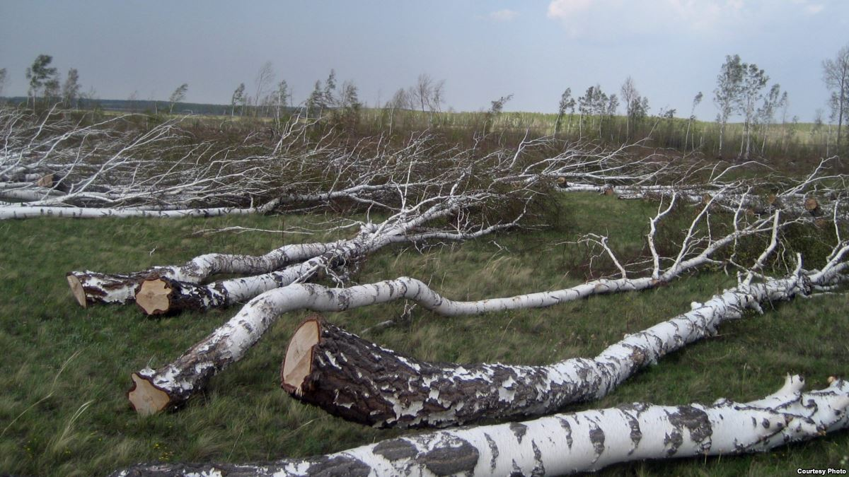 Незаконная рубка леса - взыскание убытков и наложение штрафа