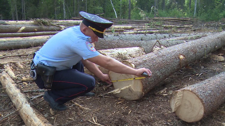 незаконная рубка леса, взыскание убытков, наложение штрафа