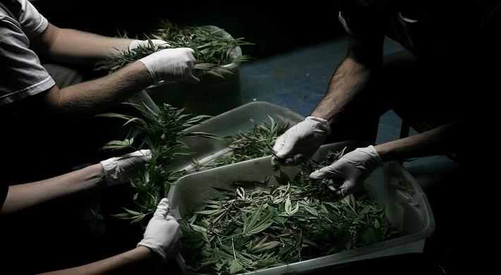 Соседи изготавливают или выращивают наркотики - куда можно обратиться написать жалобу